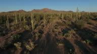 Sonoran desert aerial footage video
