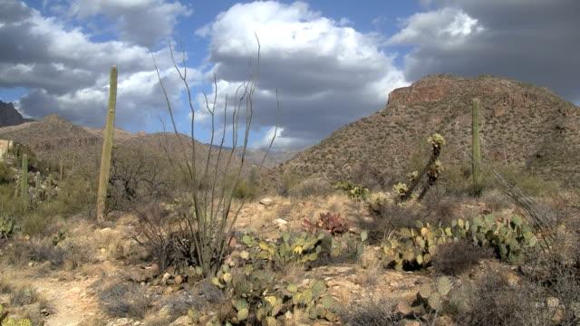 Sonoran Desert Plants video