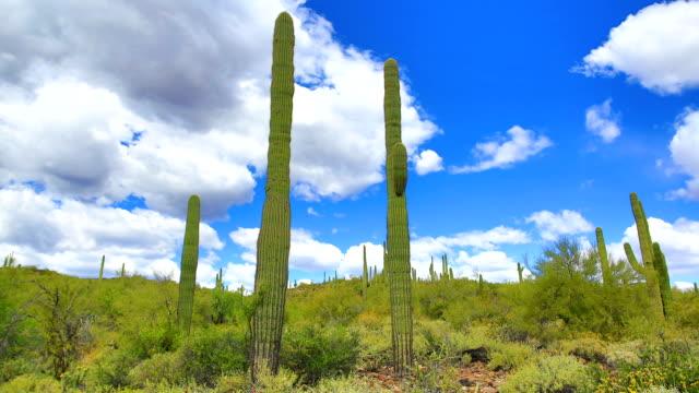 Sonoran desert time lapse video