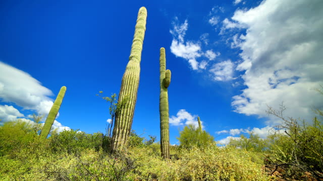 Sonoran desert time lapse video