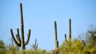 Sonoran desert video