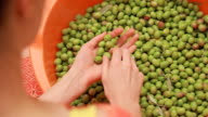 sorting olives video