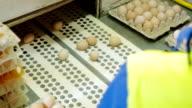 Sorting process eggs in a chicken farm video