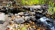 Source among trees and rocks video