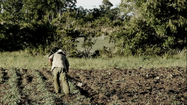 South American Farmer video