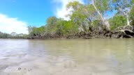 South East Queensland Australia Pristine Idyllic Island Mangrove Stream video