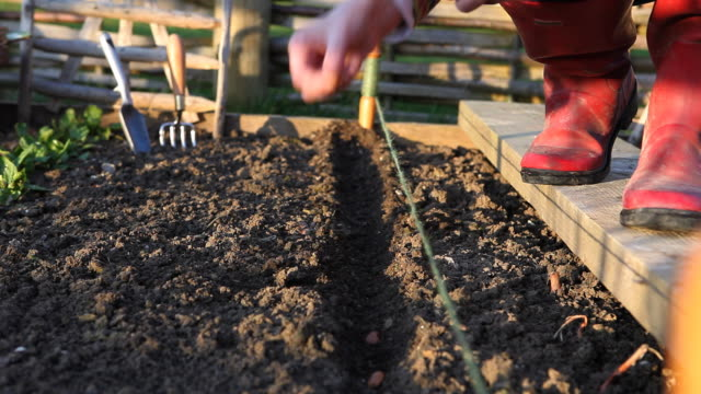 Sowing Seeds at the Allotment video