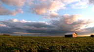 Soy Bean Field and Barn Wide HD/SD video