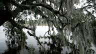 Spanish Moss, South Carolina - 2 shots video