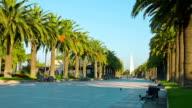 Spanish palm trees promenade, Europe video