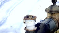 Sparrow sits on a heating pipe video