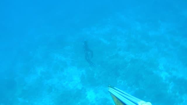spearfishing fishing video