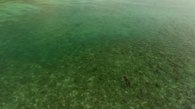 spearfishing freediver under water with a bird's-eye view video