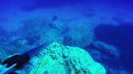 Spearfishing in blue sea point of view video
