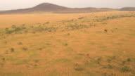 AERIAL: Spectacular African plain savannah landscape at golden light morning video