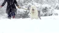 Spectacular Slow Motion Of White Shepherd Dog Running Through Snow video