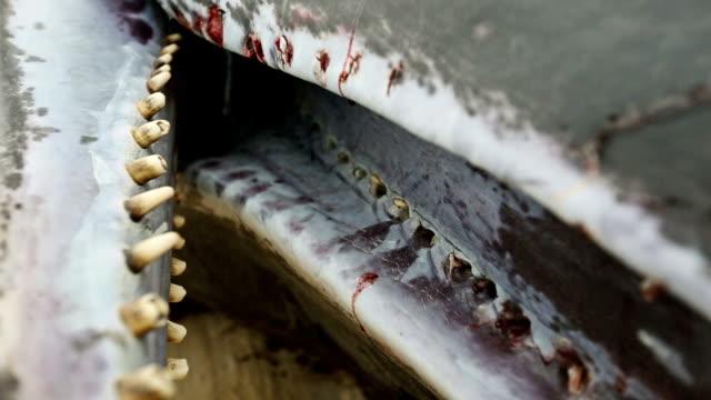 Sperm whale stranded on the beach video