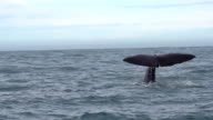 SLOW MOTION: Sperm Whale Tail video