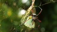 Spider attack video