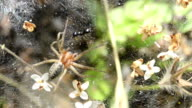 SERIES: Spider attacking an ant video