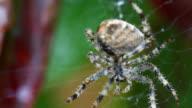 Spider grooming video