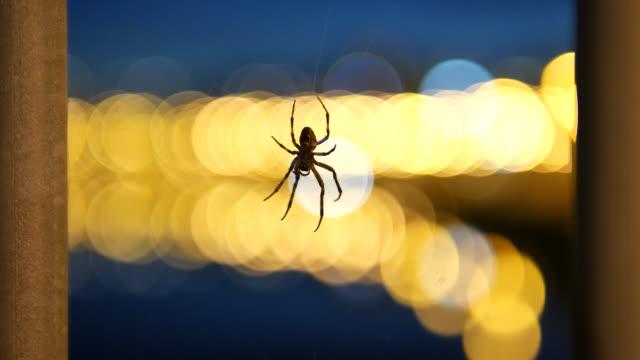 4K: Spider in spider web at night video