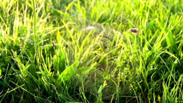 CU DS Spider In The Grass video