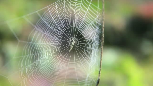 spider net video