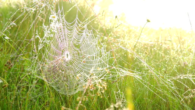 Spider on a Web. video