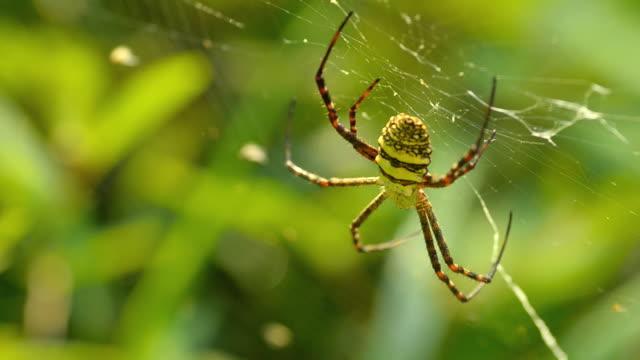 Spider on spider's web video