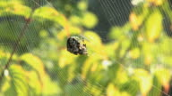 Spider on the web video