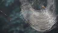 Spider on web in forest sunshine. Abstract trap and danger video