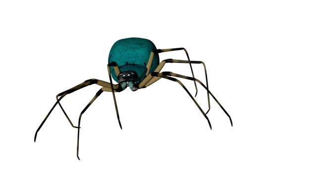 spider on white background video