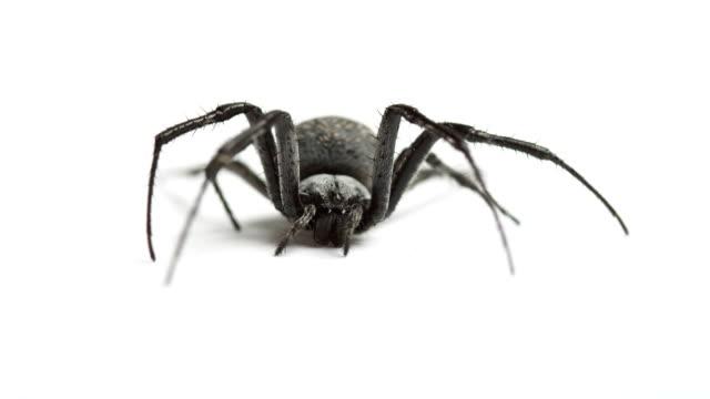 Spider on White video