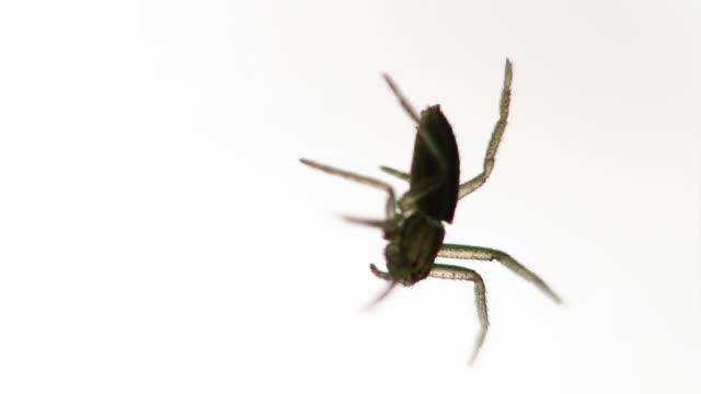 Spider Radar video