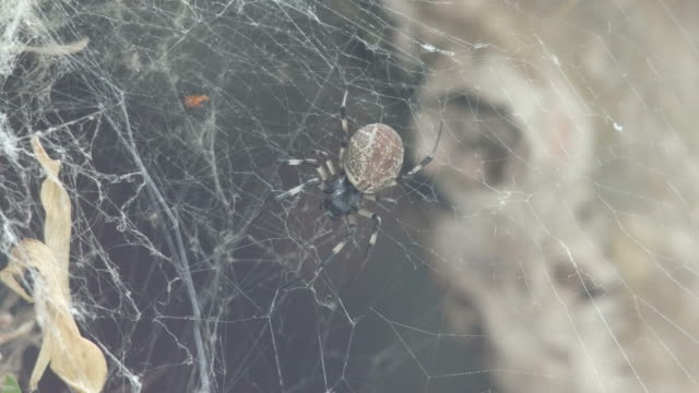 spider try to catch its prey video