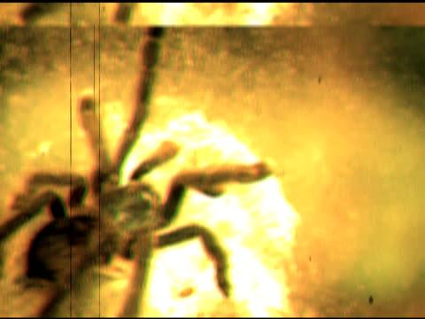 Spider video
