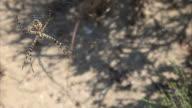 HD: Spider video