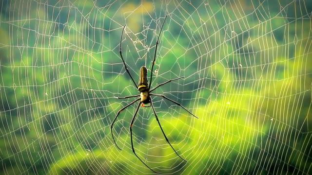Spider. video