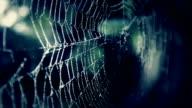 Spider web in darkness - concept video video