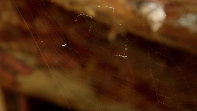 spider web - macro shot / dancing in wind video