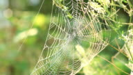 Spider web shaking on the Wind video