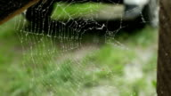 spider web tearing the wind video