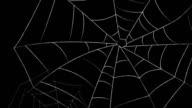 spider webs video