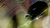 Spider wrapping prey on its web in slow motion video