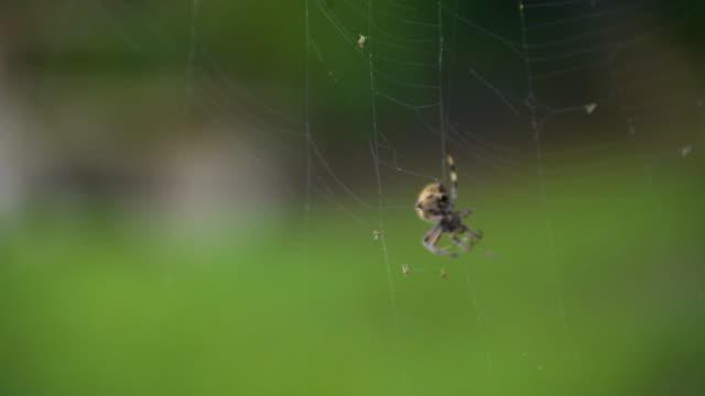 Spider's Web video