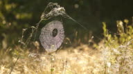 Spiderweb in the grass with dew glistens in the morning sun. video