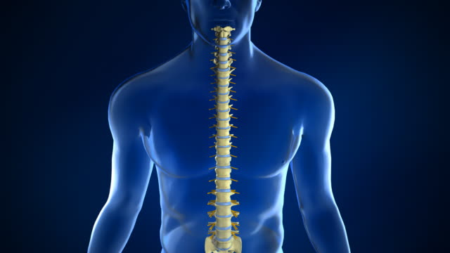 Spine Anatomy with Intervertebral Disc video