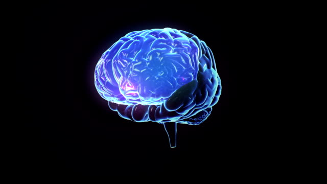 Spinning human brain with zones lighting up. Loopable. video