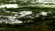 Splashes of water rolling on a mountain river video